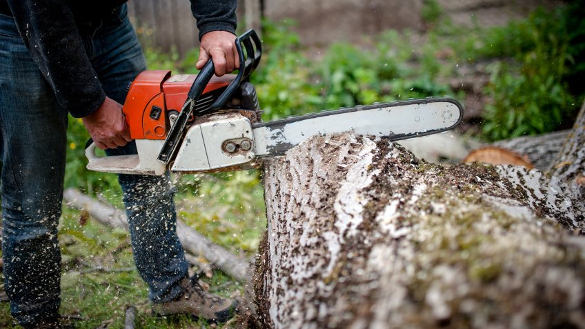 man cutting trees using an electrical chainsaw and professional tools.