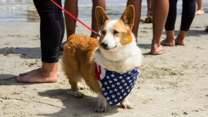 The Most and Least Expensive Cities to Own a Pet