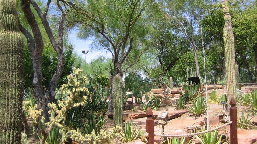 Ethel M. Botanic Cactus Garden in Las Vegas Nevada