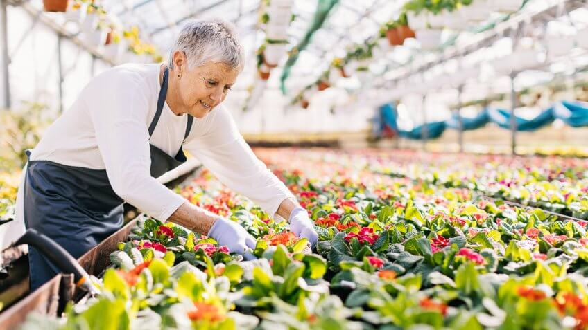 Senior woman working in the flower nursery, with copy space.