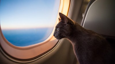 5 Options for Traveling With Your Pet