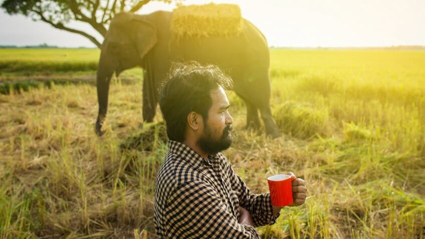 Man holding cup of coffee in the morning with elephant in the back
