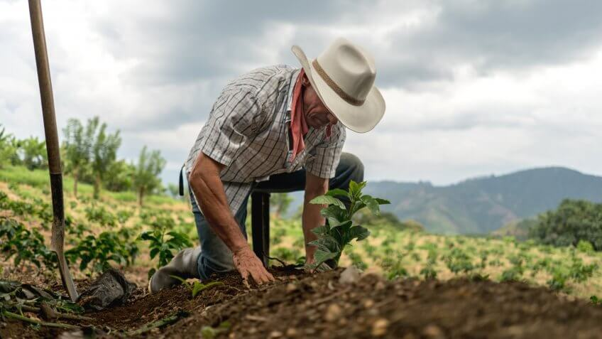 Farmer sowing the land in a field
