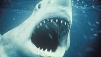 Here's How Much Movie Ticket Prices Have Gone Up Since 'Jaws'