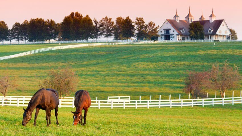 Horses grazing in the pasture at a horse farm in Kentucky.
