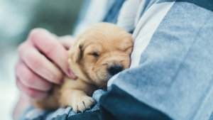 Is 'Paw-ternity Leave' for New Pet Parents the Best Job Perk Ever?