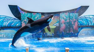 SeaWorld Attendance Makes Comeback Despite 'Blackfish' Scandal