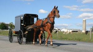 Amish Man Pioneers His Unique Version of Uber