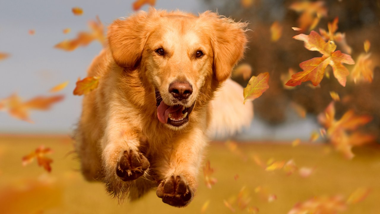 National Dog Day: Best Deals for Dog Lovers