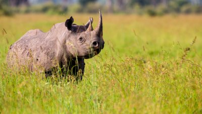 The Coolest Ways Companies Are Putting Poachers Out of Business