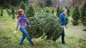 Amazon Wants to Own Christmas — Including Your 7-Foot Live Tree