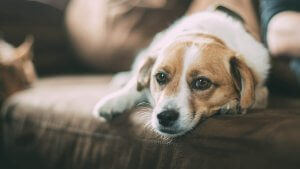 My Pets Suffered When I Didn't Have an Emergency Fund