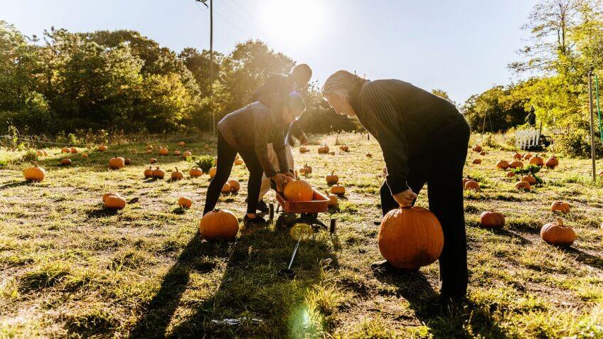 Three senior friends picking pumpkins at Pumpkin Patch in Long Island, New York, USA.