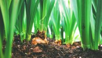 How Composting My Food Waste Helps Me, My Wallet and Mother Earth