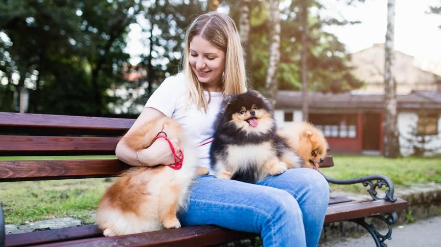Dog walker enjoying with Pomeranian dogs in park.