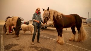 Here's How to Help the California Fire Evacuees and Victims