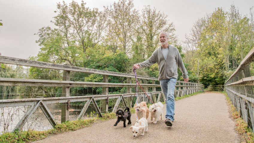 Man holding lead, walking four dogs, with trees in the background.