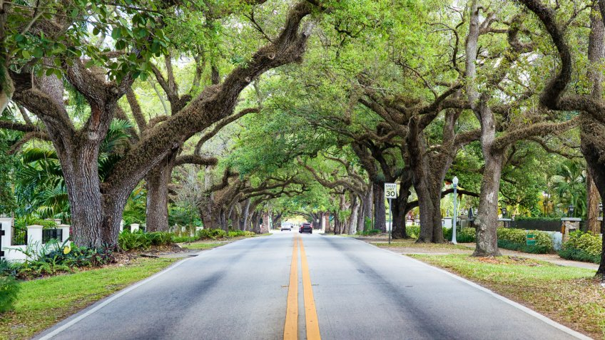 Miami Coral Gables street under tree canopy panorama with a speed limit sign and distant cars.