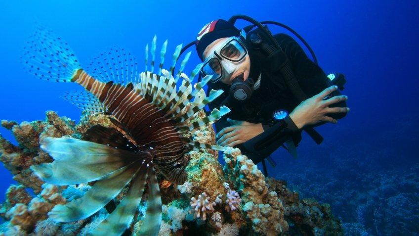 marine biologist scuba diving looking at fish