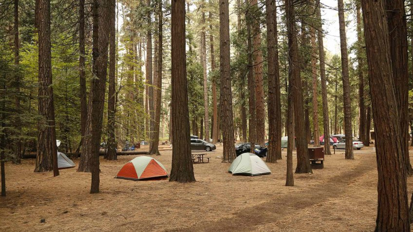 camping tents set up in the woods