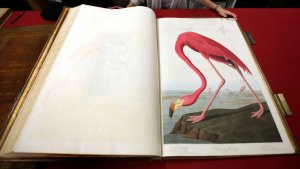 14 Gorgeous Books Somebody Bought for Millions
