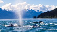 Can't Miss, Affordable Alaskan Destinations for Your Next Vacation