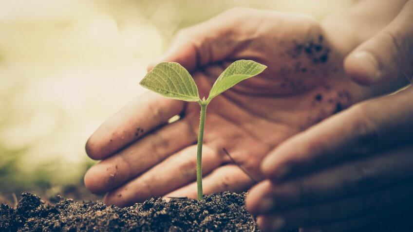 hand of a farmer nurturing a young green plant with natural green background / Protect and love nature concept.
