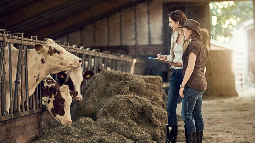 Shot of two female farmers taking care of their cattle in the barn.