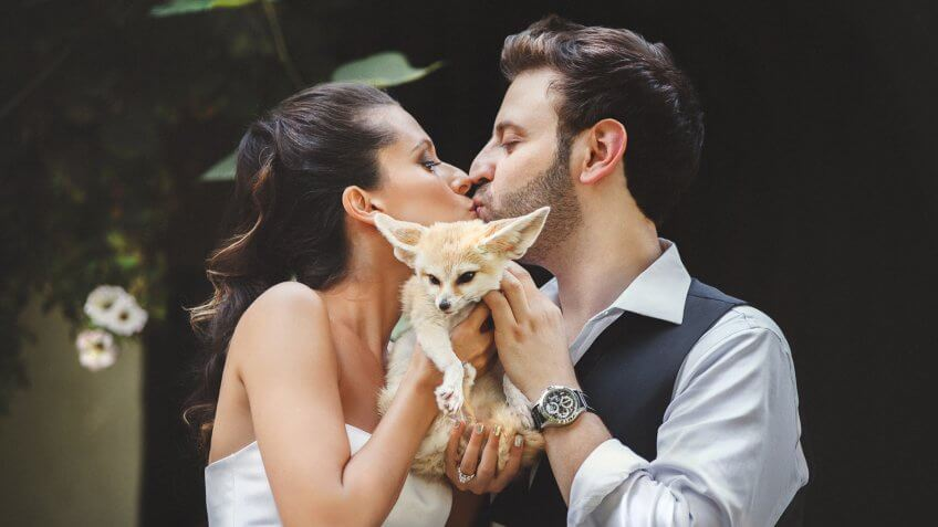 bride and groom kissing and hold on their hands a little fox in a zoo