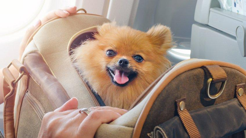 dog in carrying case on airplane