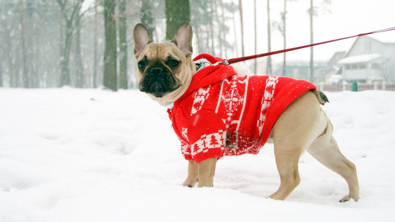 Keep Your Pet Warm This Winter in 2019's Coziest Snow Gear