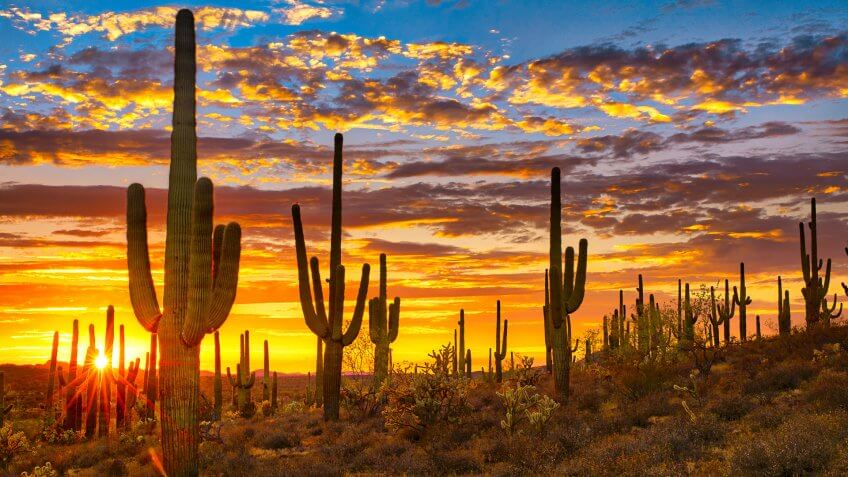 Sunset in Sonoran Desert near Phoenix Arizona