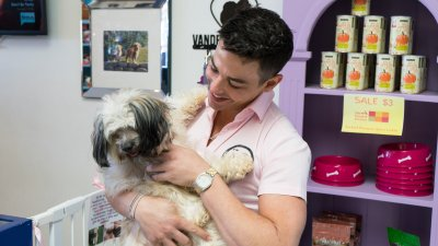 Dr. John Sessa of Vanderpump Dogs Explains the Costs of Being a Puppy Owner
