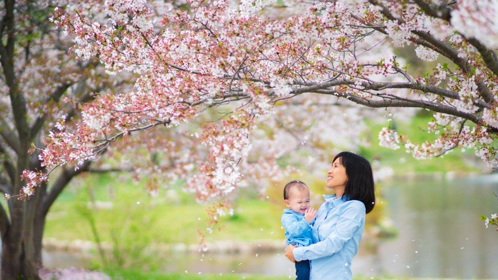 Mother holding daughter outside in the park, enjoying the cherry blossoms together, looking up and watching the petals fall.