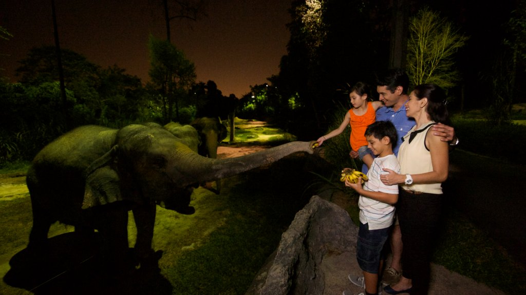 Night_Safari