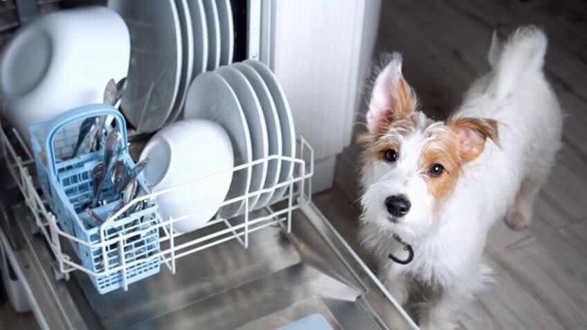 dog next to dishwasher