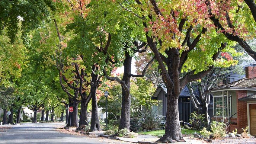 neighborhood with tree lined street