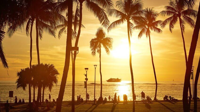 Palm tree silhouette at sunset, Hawaii, USA.
