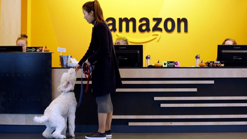 Amazon employee gives her dog a biscuit in the Seattle office