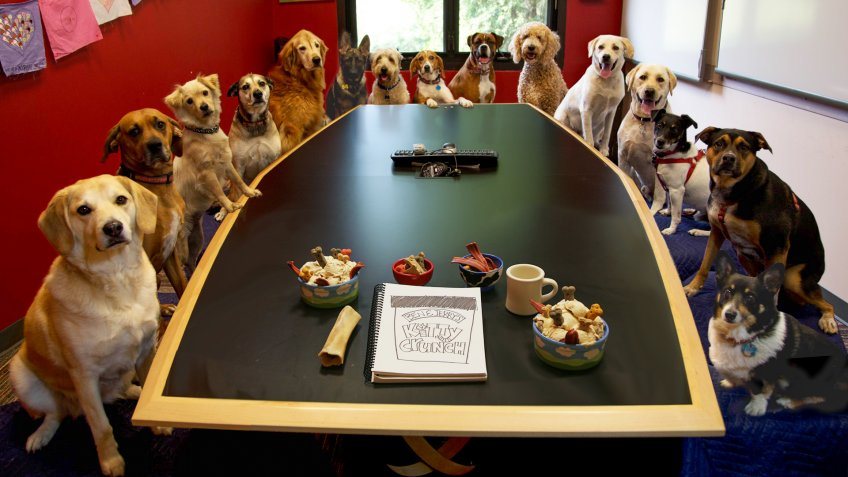 Dogs at Ben and Jerry's office