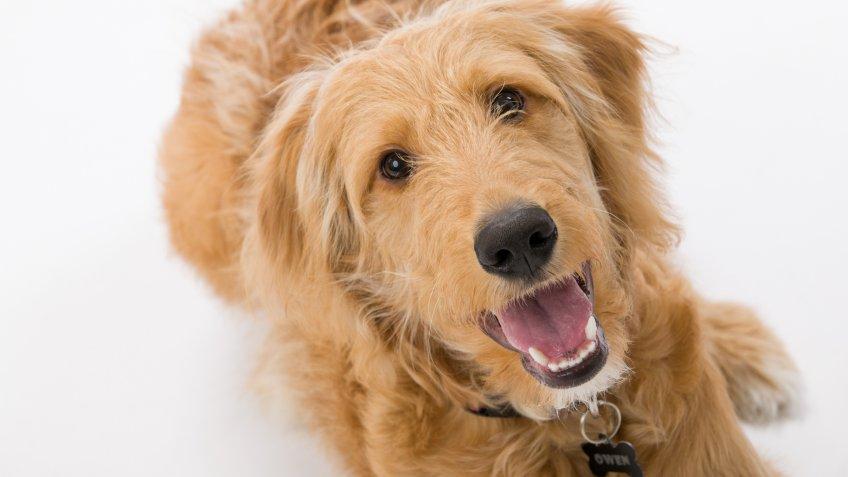 Build-A-Bear office dog headshot