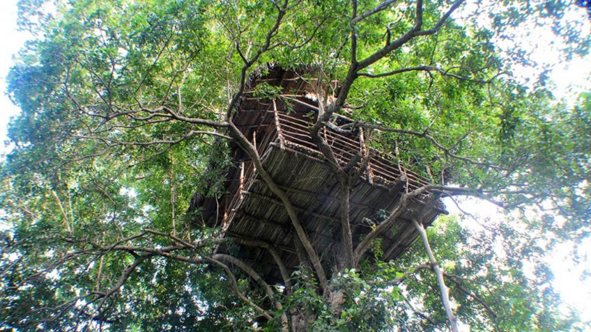 Rain Forest Treehouse in Sigiriya, Sri Lanka