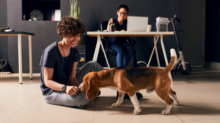 Animal in office make workers happier and bringing them joy, positive employee looking at dog which smelling her.