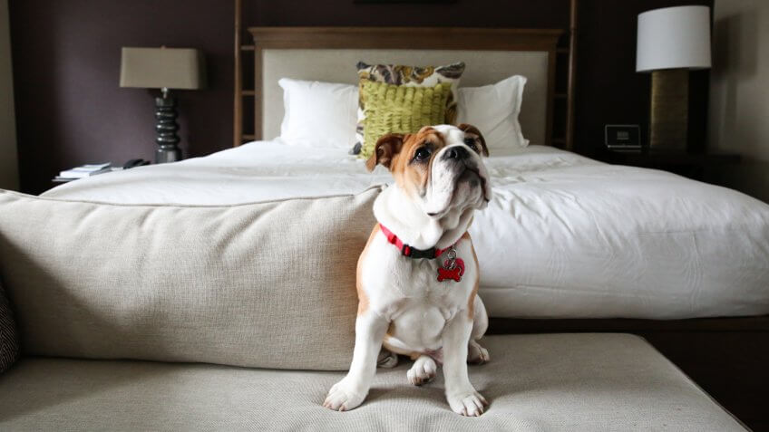 Puppy at Kimpton Hotel Vintage Seattle