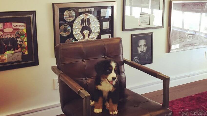 A puppy sitting in a chair at Ticketmaster offices
