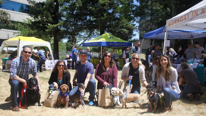 Workday company employees with their dogs