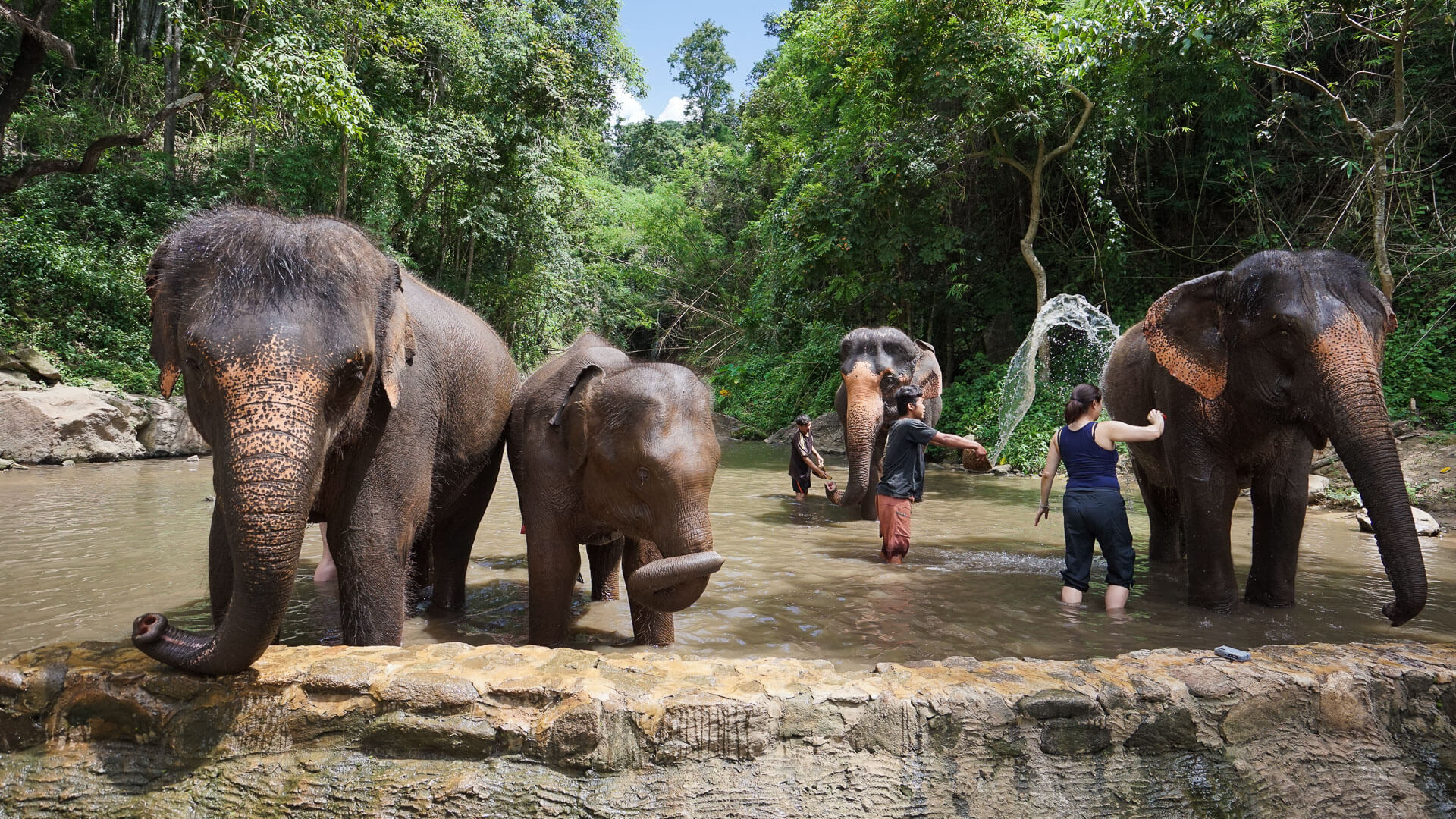 Chiang Mai Elephant Jungle Sanctuary in Thailand