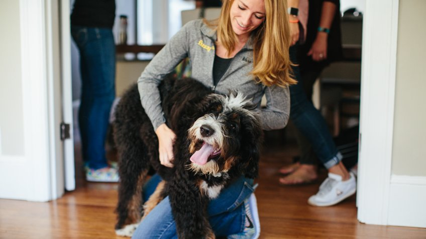Fuzzy veterinary care pet startups