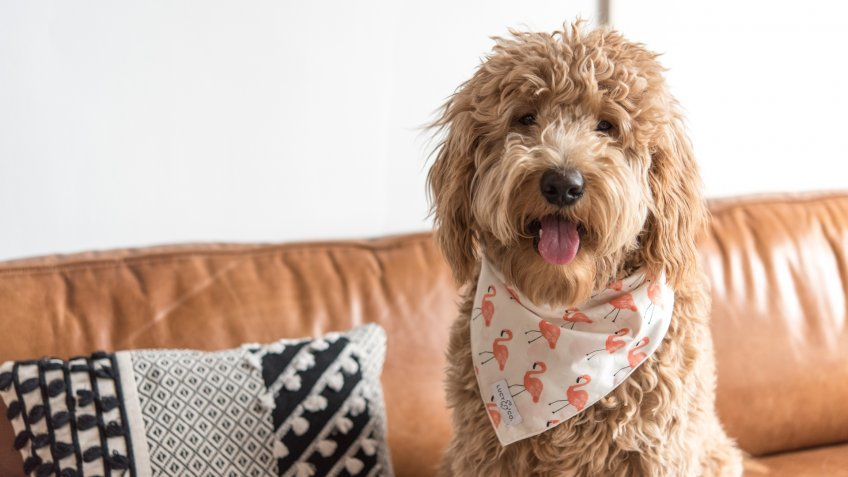 Lucy and Co dog bandanas pet startups