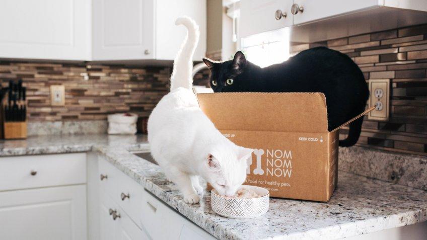NomNomNow pet food pet startups